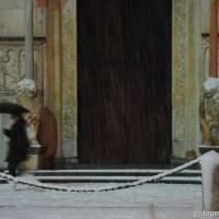 Duomo di Modena - 14